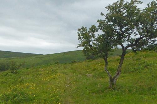 Meikleholm Hill