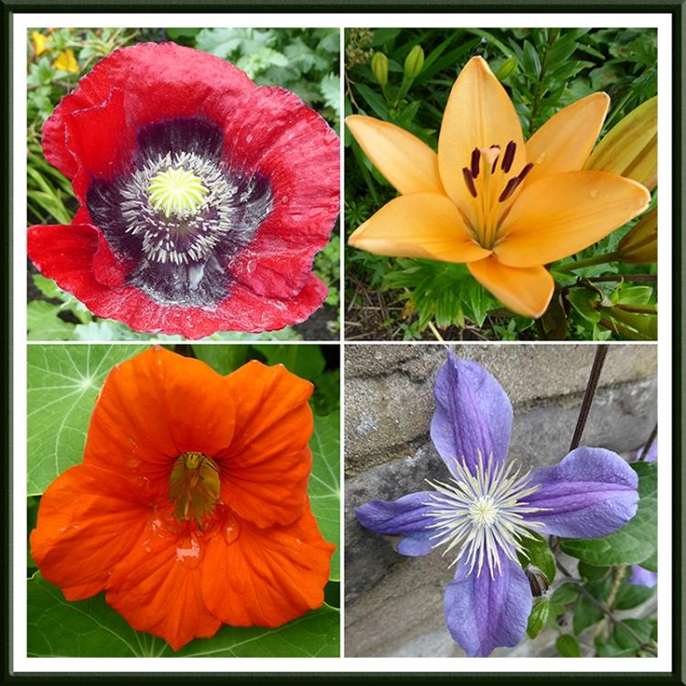 poppy, lily, nasturtium and clematis