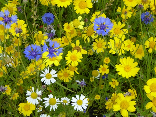 botanics meadow