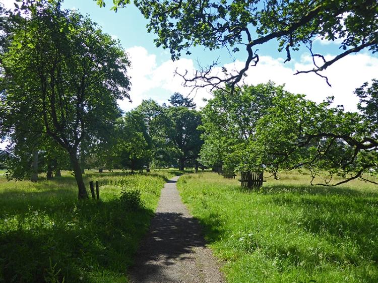 Ty Penningham's path