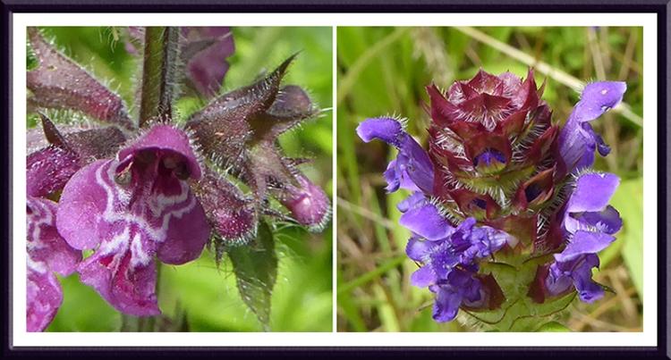 nettle and spiky flower