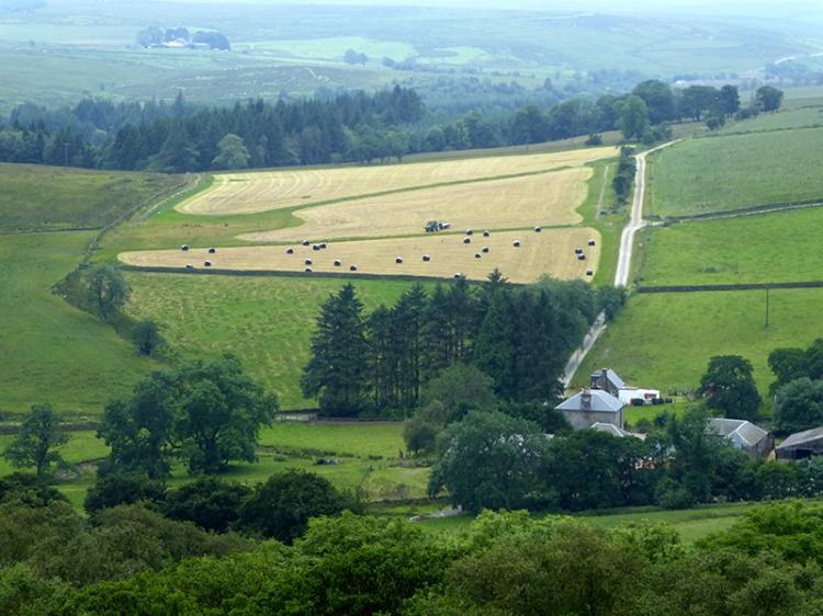 Becks farm