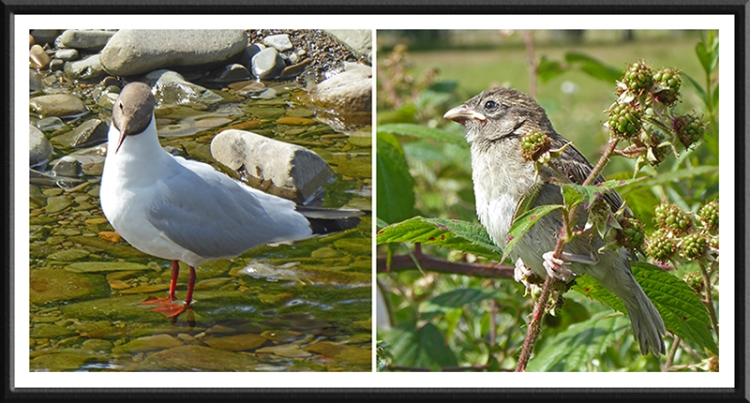 sparrow and gull