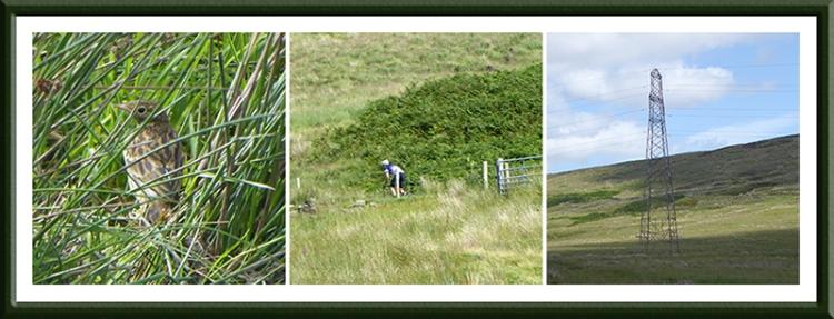 meadow pipit, cyclist, pylon
