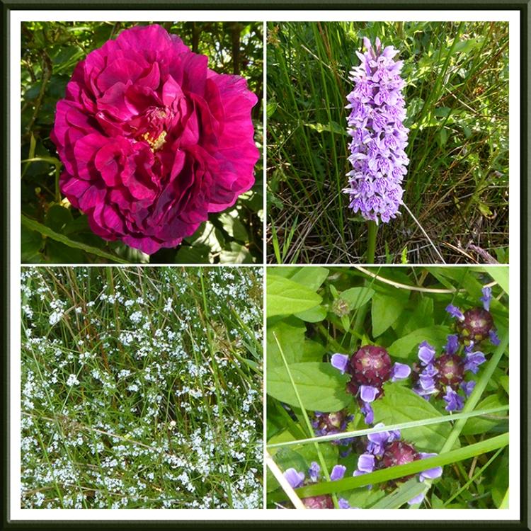 Winterhope wild flowers