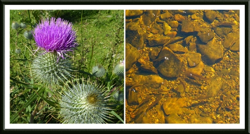 thistle and fish