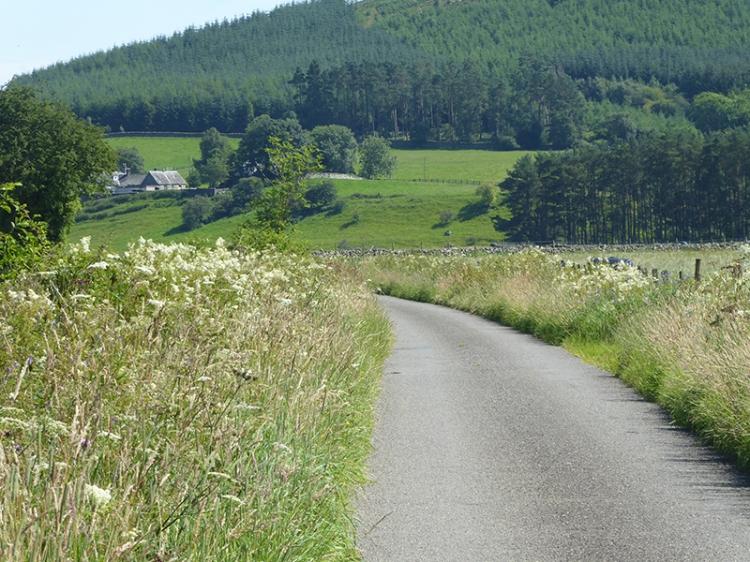 Georgefield road