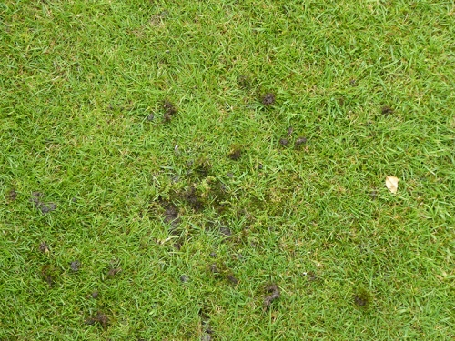 sparrow holes in lawn
