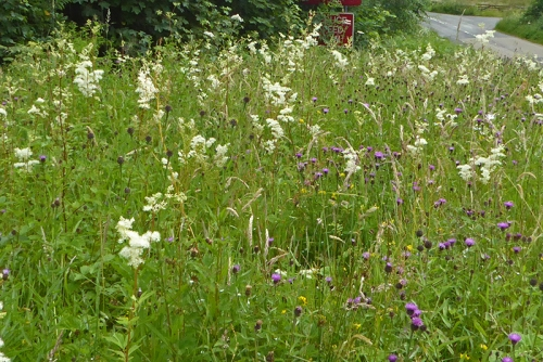 Wild flowers in verge Auchenrivock diversion