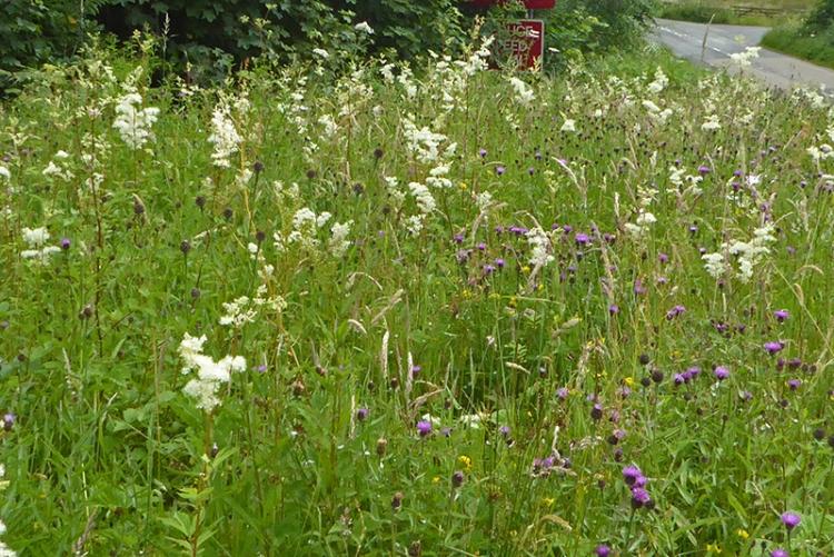 Wild flowers in verge Auchenrivock diversion