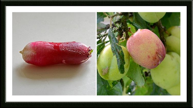 radish and plum