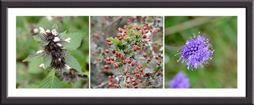 nettle. hawthorn and purple flower