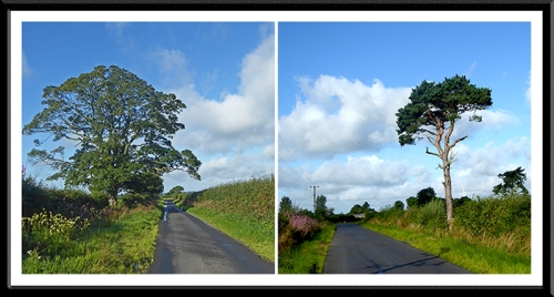 Trees in Cumbria