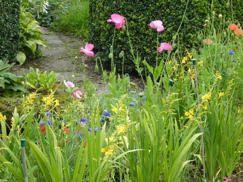 poppies, crocosmia and cornflower