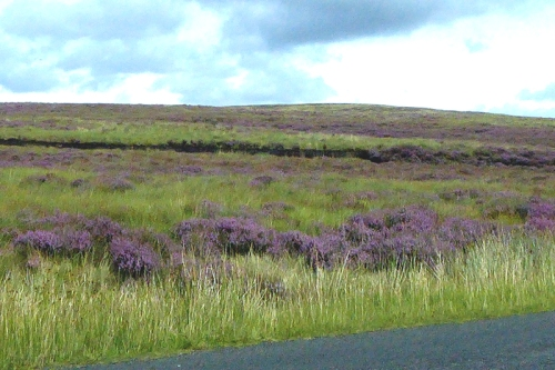 Heather and peat
