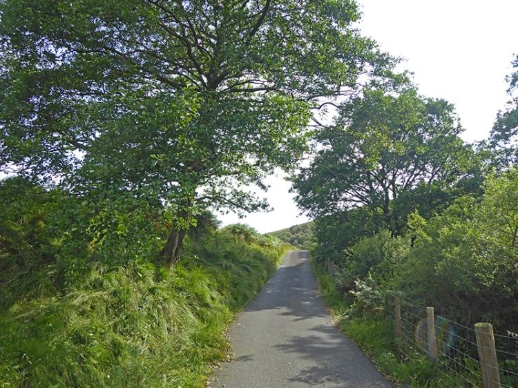 Tarras road
