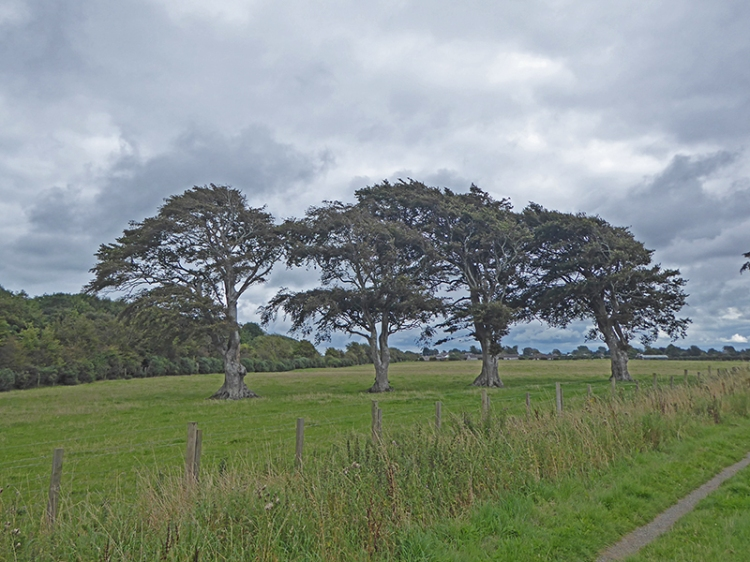 Eastrigg trees