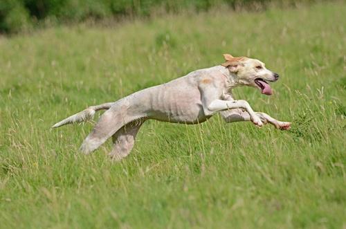 hound trail