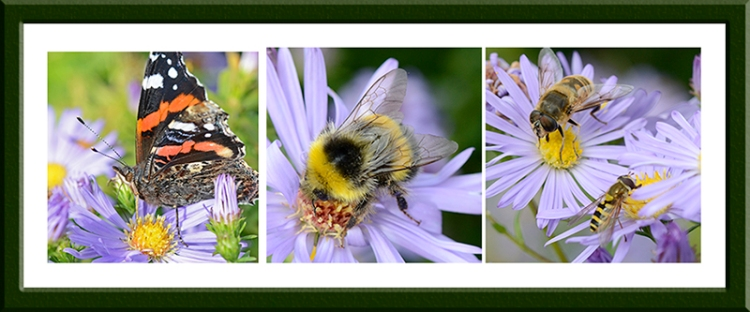insects on daisies