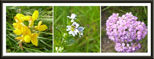 wild flowers on Meikleholm