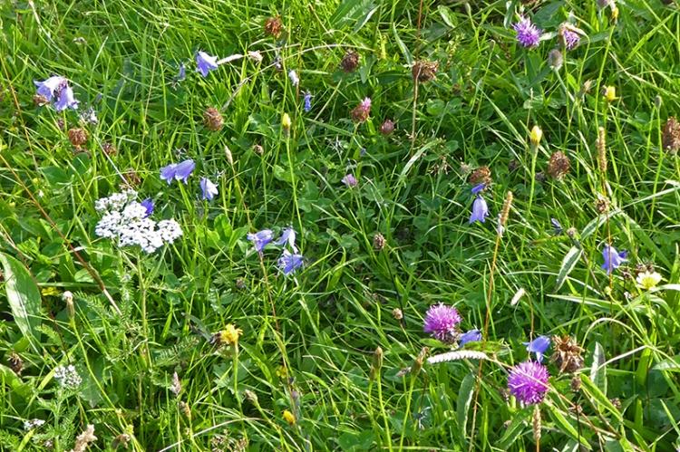 Meikleholm meadow