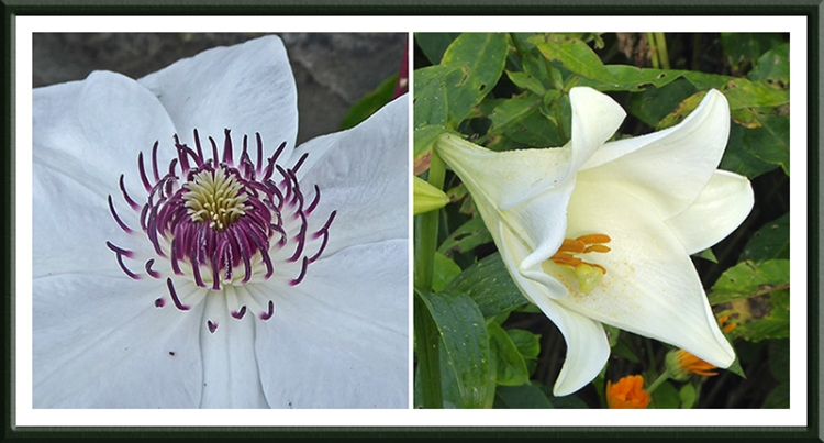 clematis and lily