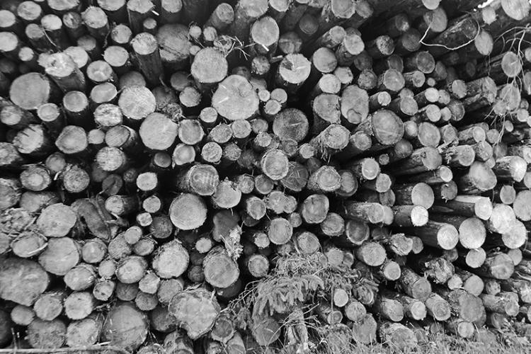 callister logs