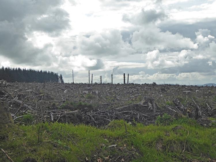 tree felling callister