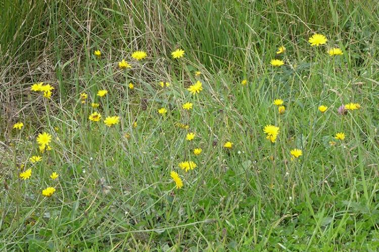 callister plants