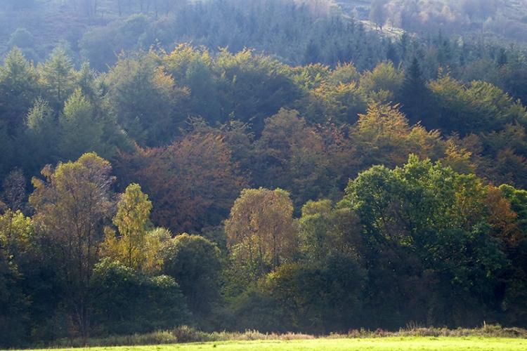 early autumn on the castleholm