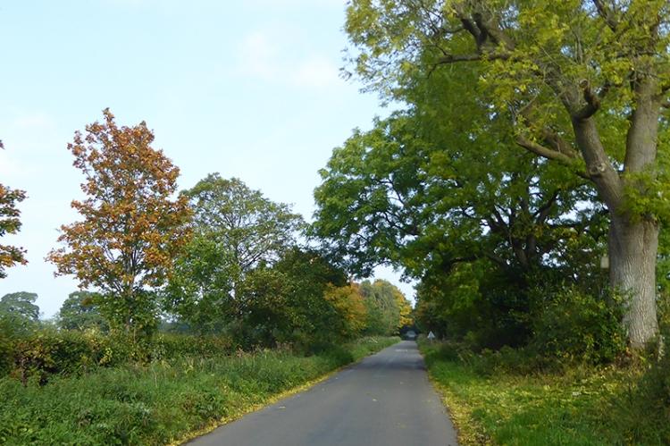 Rockcliffe trees