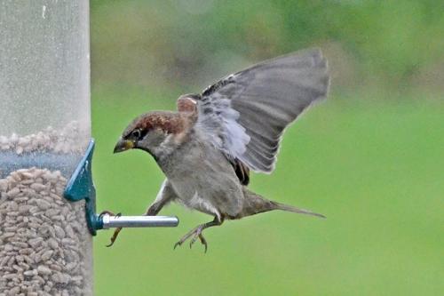 sparrow landing
