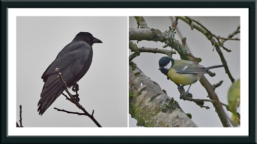 crow and great tit