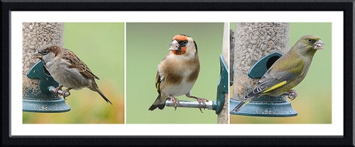 greenfinch, goldfinch and sparrow