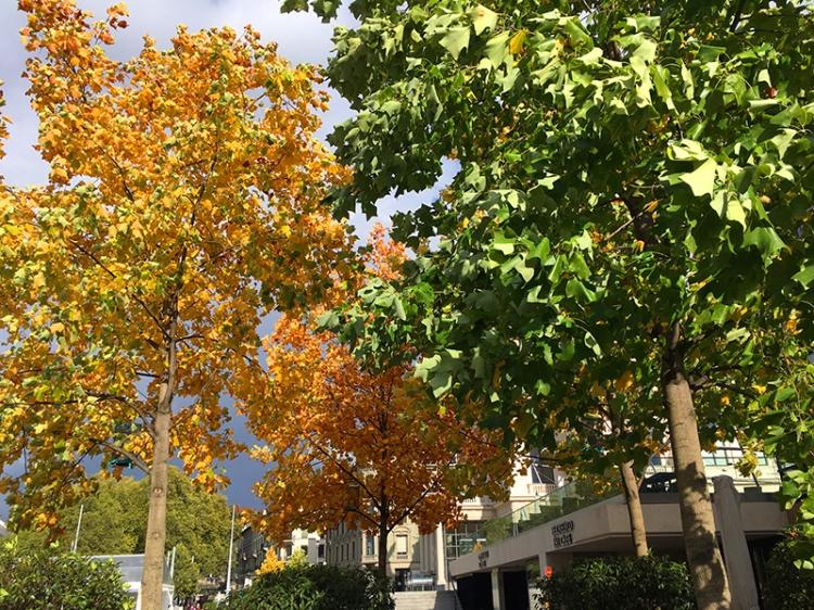 Zurich trees