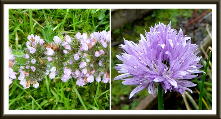 mint and chives
