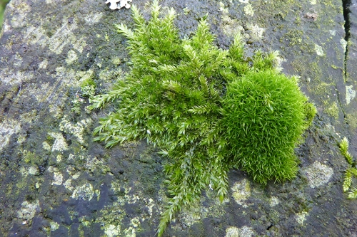 moss on gatepost