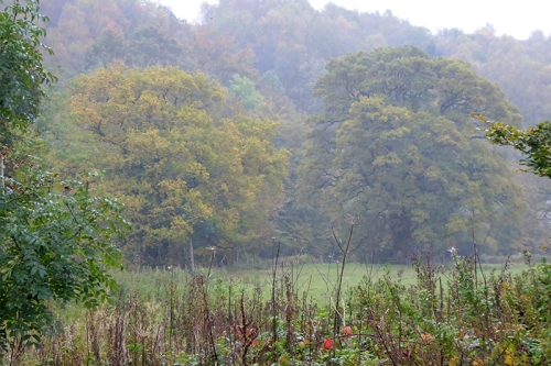 misty autumn colour