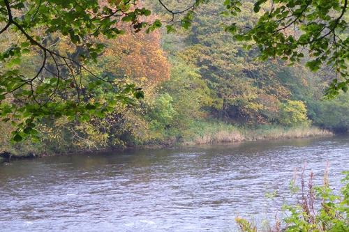 Esk autumn colour