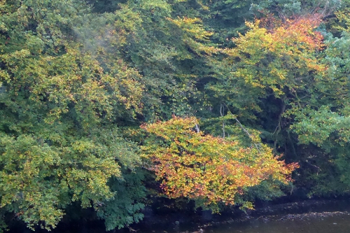 Esk autumn colour