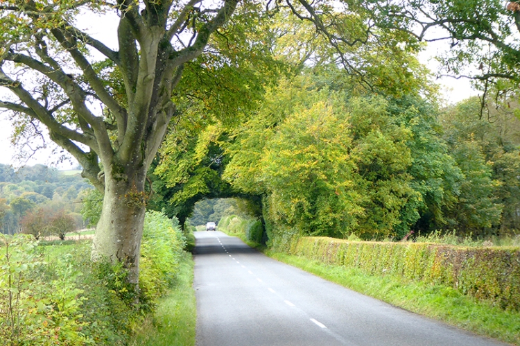 Tree Bridge near Hoddom