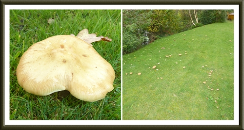 fungus at Byreburnfoot