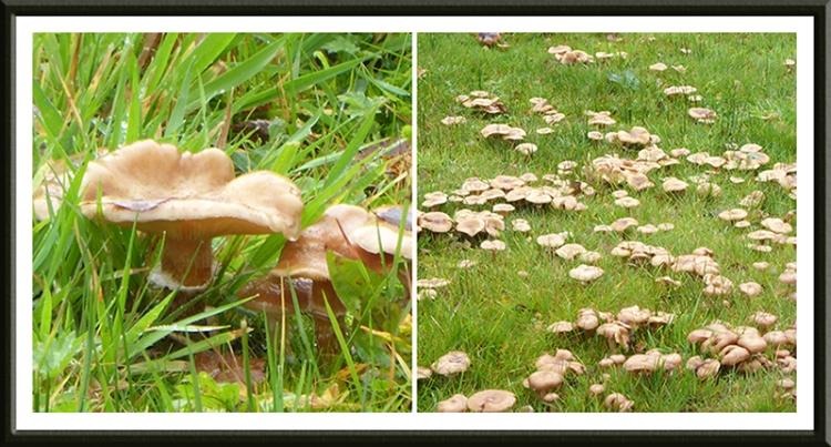 fungus beside church