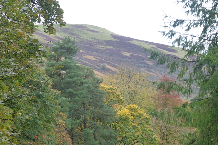 Meikleholm hill trees