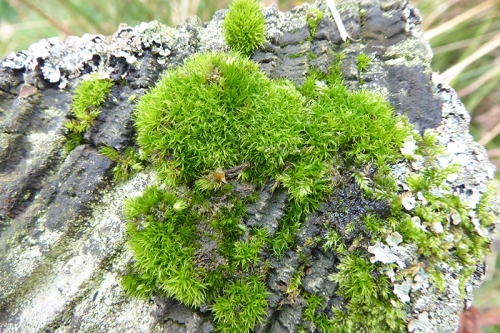 fence post moss
