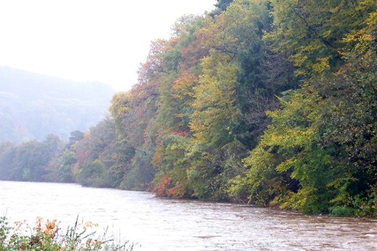 Autumn colour on Esk