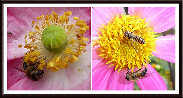 bees and hoverfly