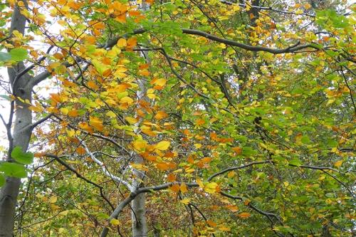 autumn colour leaves