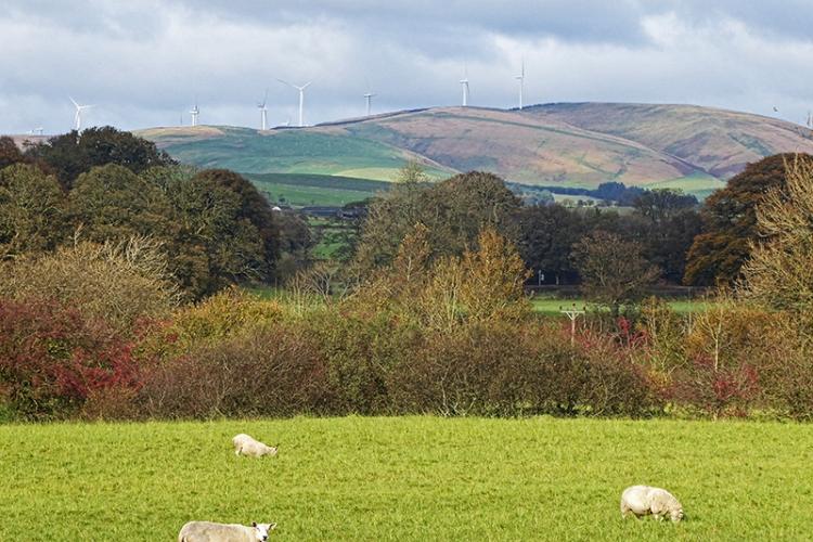 View of windmills