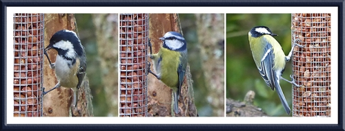 coal tit, blue tit and great tit